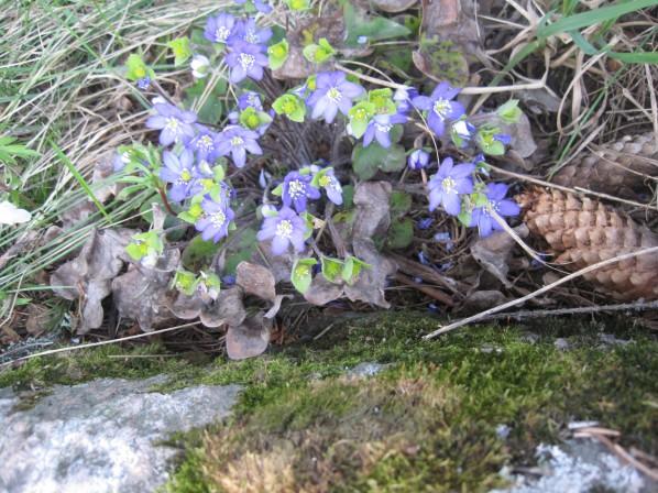 Våren pågår därute