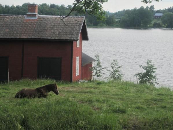 Hästen vid sjön