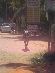 Heliga ko