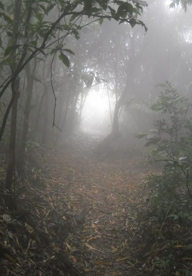 Dimmig väg